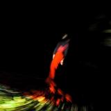 focus-art_pescara_montesilvano_danza_emilio-maggi_massimo-avenali_fotografo_dance_photography_mostra_frazioni_aurum-34