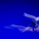 focus-art_pescara_montesilvano_danza_emilio-maggi_massimo-avenali_fotografo_dance_photography_mostra_frazioni_aurum-4